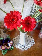 gerbera (oxyrhynchos - OLOliuqui) Tags: flowers red plants floral fleur flora decoration blumen gerbera