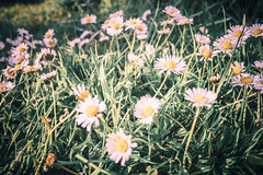 365 #339 (jonasfischle) Tags: plants flower green nature grass spring natur pflanzen blumen gras feeling grn stimmung frhling stil