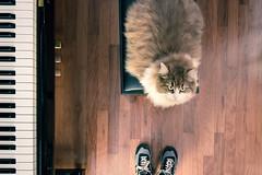 mati piano (NicchiaPhoto) Tags: music cat canon angle wide piano yamaha keyes newbalance