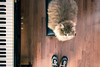 matì piano (NicchiaPhoto) Tags: music cat canon angle wide piano yamaha keyes newbalance