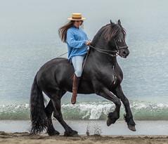 Torremolinos (Pieter Mooij) Tags: horse andaluca spain es andalusia blackhorse torremolinos spanje paard