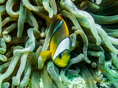 IMG_0243 (eye[4]eye) Tags: egypt diving gypten tauchen bluewaves