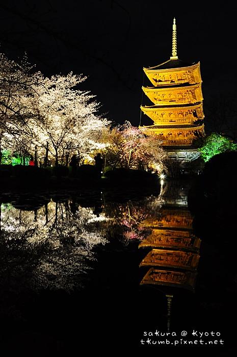 2014東寺夜櫻 (10).jpg