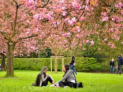 relaxing under cherry blossom (__sam) Tags: flowers paris de cherry japanese spring cloudy blossom april sceaux pard 2016