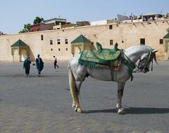 Mekns (mariamartins155) Tags: africa animal cavalo marrocos mekns