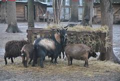 DSC_0028 (Rinswid) Tags: park nature animal spring kharkov feldman ecopark