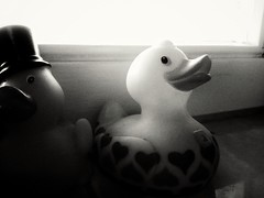 Ducks (J.C. Moyer) Tags: blackandwhite window duck ducks tiles rubberduck rubberducks rubberduckies