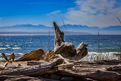 Olympic Mountains from Whidbey Island (trail66td) Tags: bird whidbeyisland pacificnorthwest washingtonstate