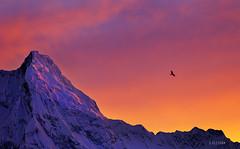 Rakaposhi - II (xeeart) Tags: pakistan sunset mountain mountains clouds canon landscape earth rakaposhi hunza gilgit hunzavalley landscapephotography canon6d xeeshan