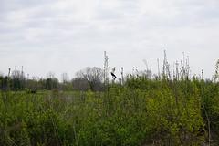 042.Birb1-trail (aetherspoon) Tags: park bird greentree birb
