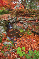 Falling With The Leaves || WATERCOURSE || EVERGLADES GARDENS (rhyspope) Tags: new blue autumn red pope mountains tree fall leaves yellow gardens wales creek canon garden pond stream south australia nsw everglades 5d aussie rhys mkii leura rhyspope