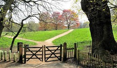 """""""Once More Unto The Beech"""" (standhisround) Tags: uk trees london field grass fence gate estate path hill meadow hampstead hampsteadheath kenwoodhouse kenwood copperbeech hff behindfences fencedfriday"""