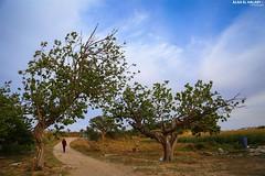 Northern Gaza City - Beit Lahia (TeamPalestina) Tags: sunset sky sun sunrise canon landscape landscapes photo am amazing nice nikon photographer natural sweet live palestine comfort sunrays gaza beautifull palestinian  landscapecaptures