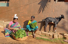 THREE WOMEN AND SOME LEAVES (GOPAN G. NAIR [ GOPS Photography ]) Tags: life morning india photography village shot business vegitable seller hampi gops unning gopan gopsorg gopangnair gopsphotography