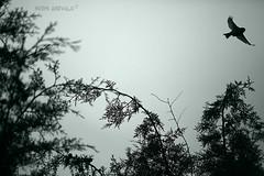 Vuela (Noem Arvalo (antes Colore-arte)) Tags: bw naturaleza bird nature monochrome canon monocromo ps bn pjaro virado