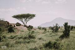 _N6A2346 (Kappas valokuvaamo) Tags: africa park wild mountain game tree nature animal animals landscape drive kenya wildlife east safari national kenia tsavo afrikka