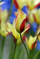 Spring 2016 - 869 LBG (Lostash) Tags: life flowers plants nature spring flora seasons leicesterbotanicalgardens