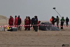 Stranding potvissen Texel (Romar Keijser) Tags: strand sperm 12 texel wale paal potvis stranding spermwale
