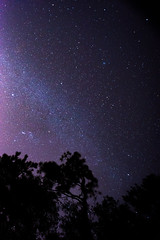 DSC_8722.jpg (Boy of the Forest) Tags: trees sky field fog night stars landscape florida meadow wideangle astro galaxy astrophotography astronomy fl nightsky 15mm milkyway gemeni gemonidsmeteorshower