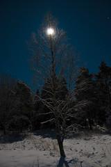 Moon and a birch (markoknuutila) Tags: winter moon night moonlight porkkala