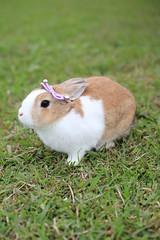 (ina070) Tags: rabbit canon  6d  canon6d