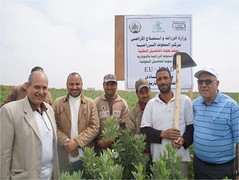 Picture18 (ICARDA-Science for Better Livelihoods in Dry Areas) Tags: farmers northafrica egypt climatechange mena pulses ifad nutrition resilience drylands icarda incomes westasia croprotation seedsystems conservationagriculture euifad wheatlegumecroppingsystems