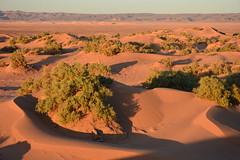 M'Hamid Dunes (R Boyd) Tags: morocco mhamid