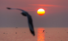 Before the sunset (prasit suaysang) Tags: sunset sea orange sun seagulls reflection skyline landscape thailand evening outdoor samutprakarn bangpu