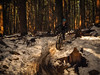 Expresso Slush Slide (kendyck1) Tags: bc mountainbike fil northshore espresso northvancouver mountainbiking fromme