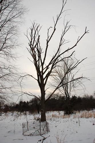 "Dead Elm Silhouette <a style=""margin-left:10px; font-size:0.8em;"" href=""http://www.flickr.com/photos/91915217@N00/24492154483/"" target=""_blank"">@flickr</a>"