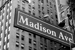 Look Up New York (Mithaq Kazimi) Tags: city nyc newyorkcity sky blackandwhite newyork building bird stairs skyscraper buildings streetlight cityscape skyscrapers pov flag stairway lookingup madison madisonavenue upward madmen madisonave