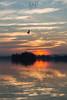Down Of Freedom (Daniele Pauletto) Tags: winter light sun lake clouds lago italia tramonto nuvole dusk seagull sole pusiano dpphotography