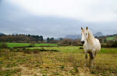 white horse (adrizufe) Tags: horse white green nature animal landscape ilovenature nikon cloudy ngc basquecountry anboto durangaldea nikonstunninggallery aplusphoto d7000 adrizufe adrianzubia