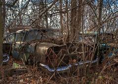 DSC08559.ARW-01 (juice95m3) Tags: abandoned rust vintagecar automobile junkyard oldcars classiccars
