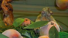Bellagio_Chinese New Year-7 (Swallia23) Tags: las vegas flowers money hotel peach chinesenewyear casio nv bellagio yearofthemonkey 2016 conservatorybotanicalgarden