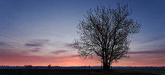 _MG_1704_DxO (wgbalrog) Tags: red tree clouds canon rouge eos dawn countryside nuage campagne arbre ef f4 1740 6d aube
