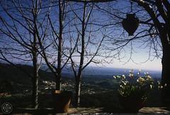 Saudade 592 ( Portimagem) Tags: portugal turismo madeira historia funchal montes patrimnionacional