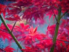In my Japanese Garden (broombesoom) Tags: red rot art leaves digital germany garden rouge deutschland japanese leaf europe arte jardin processing blau blatt bltter allemagne arbre garten japanischer textur