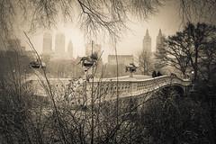 Central Park, NYC (nianci pan) Tags: park nyc newyorkcity bridge winter people blackandwhite bw mist lake snow plant newyork flower reflection tree water monochrome urn fog river landscape outdoor centralpark manhattan sony pan bushes bnw sonyalphadslr nianci sonyphotographing