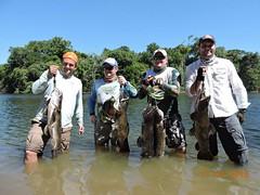 12628394_559338457548947_595951162300681530_o (Nelson Lage - pescamazon.com.br) Tags: trip travel fish river fishing amazon bass peixe catfish xingu flyfishing casting tucunare pescaria amazonia peacockbass trombetas payara