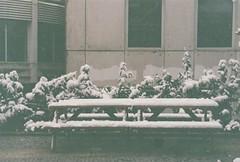 An Abstract Picnic on the Back Park Bench (miskiamber) Tags: winter white snow building nature weather canon turkey garden campus education solitude trkiye istanbul single canonae1 boaziiniversitesi bogaziciuniversity
