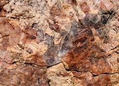 psms01 (srosscoe) Tags: texas geology schist metamorphic masontx hsugeology