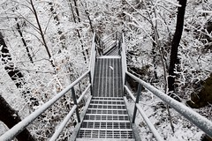 "Staircase down the Escarpment in ""The Black and White Forest"" Hamilton (Joseph Hollick) Tags: white snow hamilton whiteforest snowcovered tree blackandwhiteincolour smileonsaturday blackandwhiteforest"