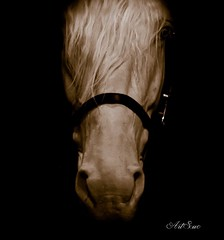 (artsuephotographie) Tags: horses horse france nature animals cheval talon