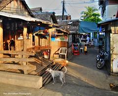 hey doggie (Rex Montalban Photography) Tags: philippines hdr legaspi bicolregion