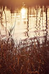 Coucher de soleil sur la Dore (fred.guerteau) Tags: riviere roseaux auvergne coucherdesoleil dore thiers