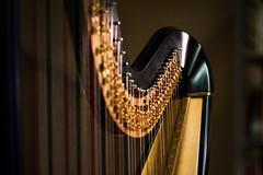 Concertista (S. Hemiolia) Tags: music nikon explore musica strings harp arpa musicalinstruments corde strumentimusicali explored d700