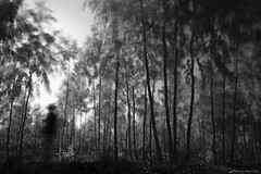 Ghost of the jungle! (Ramesh Adkoli) Tags: bw landscape ir blackwhite capturenx madhurekere d800e