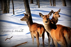 2016-03 (Inspiration By Michelle) Tags: canada animals quebec omega parc parcomega