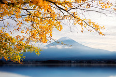 Fujisan in autumn (Krunja) Tags: morning travel autumn winter red sky mountain lake snow plant tree fall leave tourism nature water beautiful yellow japan river garden season landscape japanese volcano tokyo leaf maple scenery asia day fuji mt view background space scenic mount fujisan copy kawaguchiko
